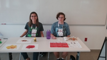 Andreia and Itachi at the outreach fair. Bee decision making games and how to grow a fly.